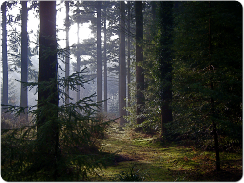 Longleatforest